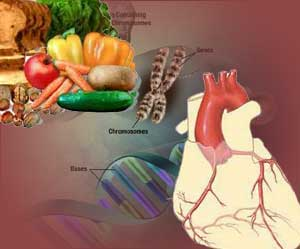 Genes Diet And Heart Disease