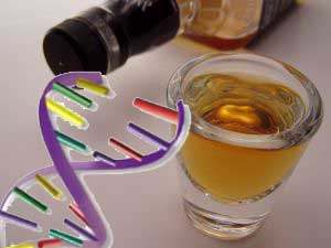 Genetic clues identified in alcohol addiction