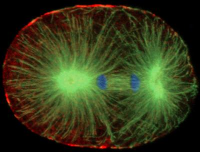 Insight on wonder of cell division