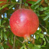 Pomegranate juice components to fight cancer