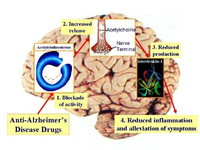 Improving memory in Alzheimer's patients