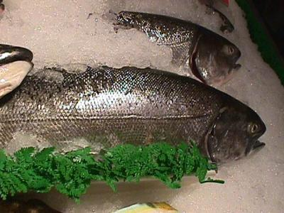 Mercury Fish on The Health Risks Posed By Mercury Contaminated Fish Is Sufficient To