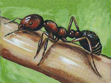 Ant guts could pave the way for better drugs