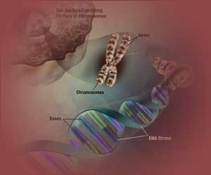 Short chromosomes put cancer cells in forced rest