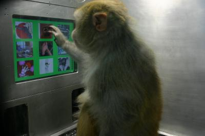 Monkeys' ability to reflect on their thoughts