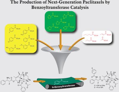 More efficient production of paclitaxel