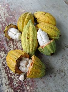 Natural compounds in cocoa and type 2 diabetes