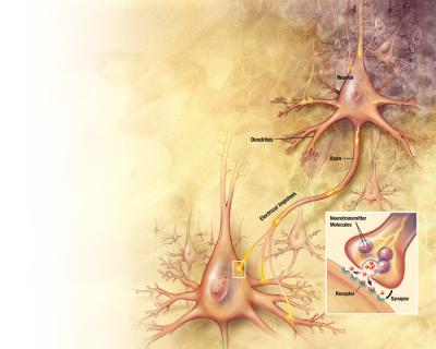 Protein key to neuro-regeneration