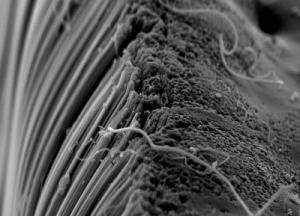 Carbon Nanotubes Could Have Asbestos-Like Health Complications