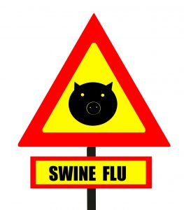 Efforts to quickly develop swine flu vaccine