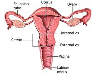 Chronic Stress And Ovarian Cancer