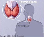 Improving Accuracy Of Thyroid Hormone Testing