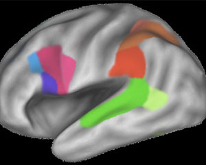 Passive Learning Too Imprints On The Brain