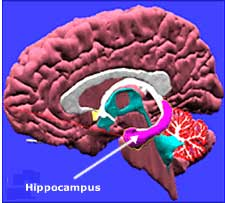 Life and death in the hippocampus