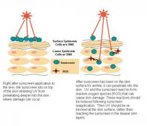 Sunscreens Can Damage Skin