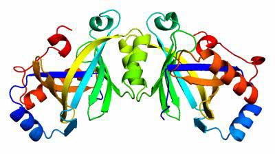 Structure of key enzyme in plague bacterium