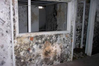 Mold linked to asthma