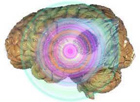 Healthy older brains not significantly smaller