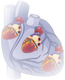 Oxygen-saturated blood reduces levels of damaged heart tissue