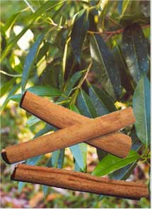 Cinnamon For Treatment Of Diabetes?