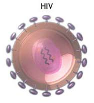 HIV-1's High Virulence Might Be An Accident Of Evolution