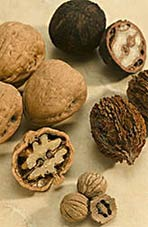 Walnuts May Halt Cancer And Heart Disease