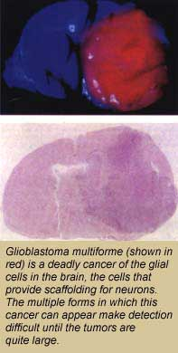 Gelsomina - Disease With A Purpose
